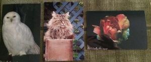 PatriciaNewton_Owl_Cat.jpg
